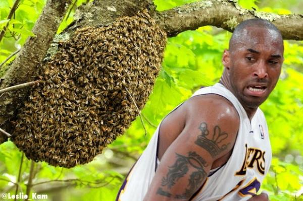 Опасность пчелиных укусов