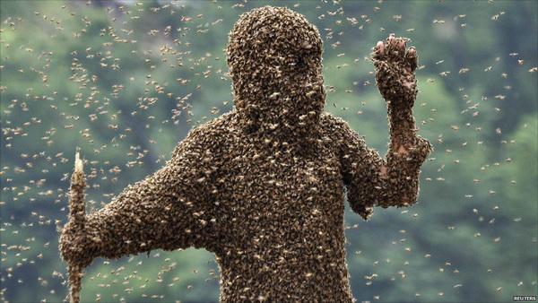 Пчелы и человек