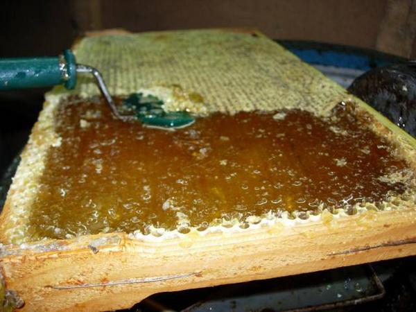 Чем же полезен пчелиный забрус Состав и свойства
