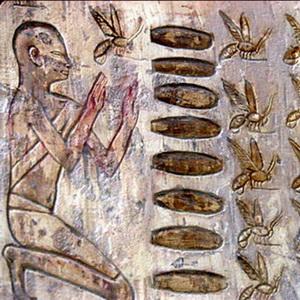 Пчелиный яд известен давно