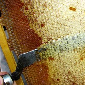 Пчелиный забрус